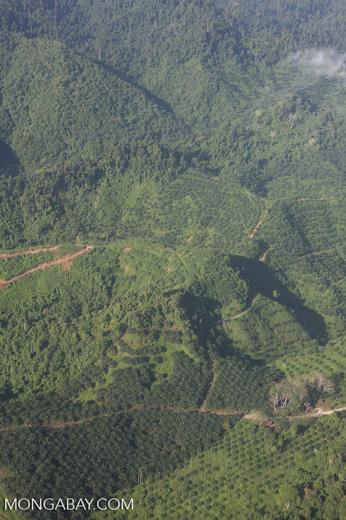 Oil palm plantations in Malaysian Borneo -- borneo_2823