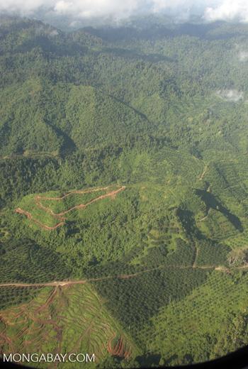 Oil palm plantations in Malaysian Borneo -- borneo_2824
