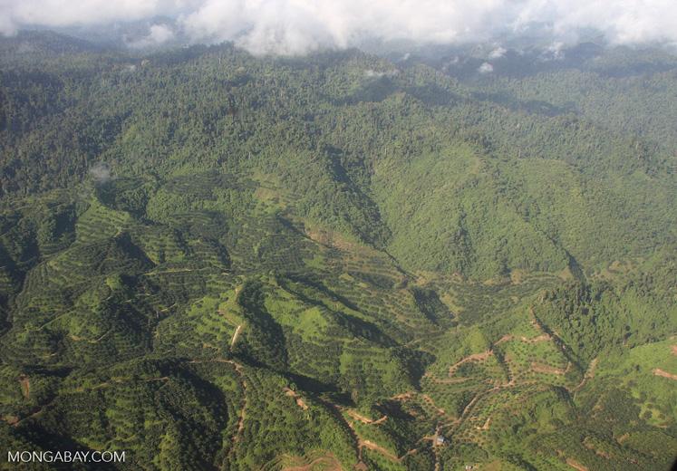 Oil palm plantations in Malaysian Borneo -- borneo_2827