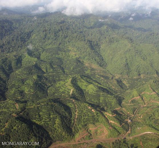 Oil palm plantations in Malaysian Borneo -- borneo_2828