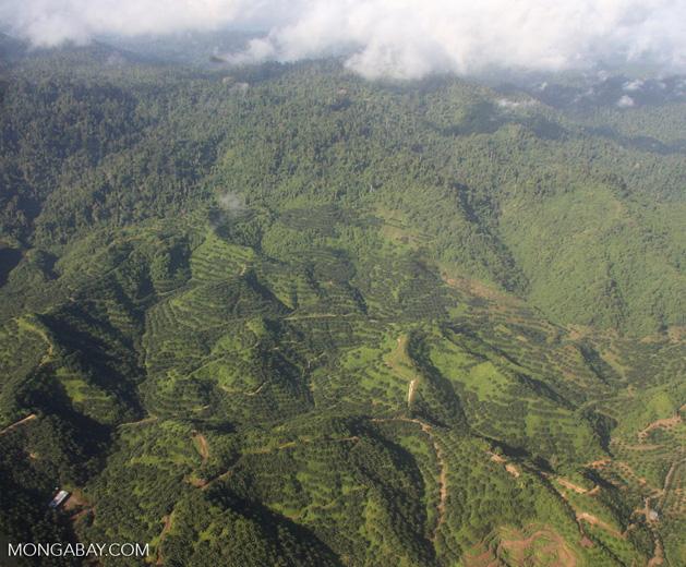 Oil palm plantations in Malaysian Borneo -- borneo_2829