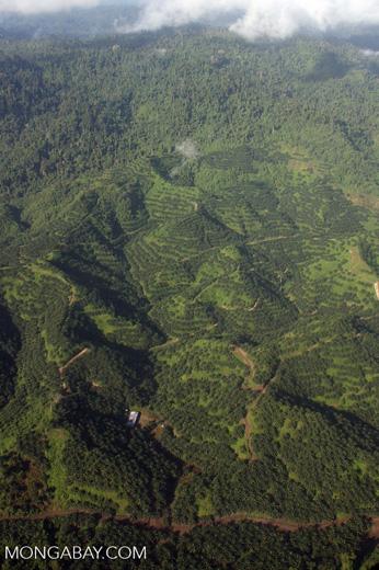 Oil palm plantations in Malaysian Borneo -- borneo_2830