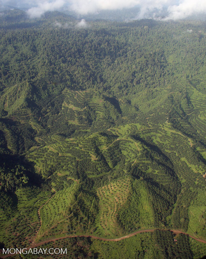 Oil palm plantations in Malaysian Borneo