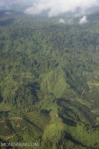 Oil palm plantations in Malaysian Borneo -- borneo_2833