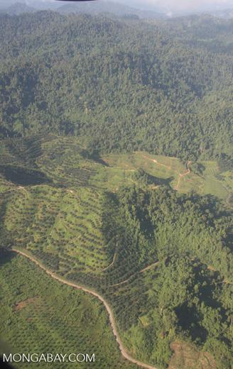 Oil palm plantations in Malaysian Borneo -- borneo_2836