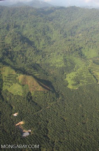 Oil palm plantations in Malaysian Borneo -- borneo_2844