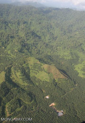 Oil palm plantations in Malaysian Borneo -- borneo_2845