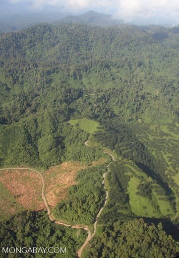 Oil palm plantations in Malaysian Borneo -- borneo_2846