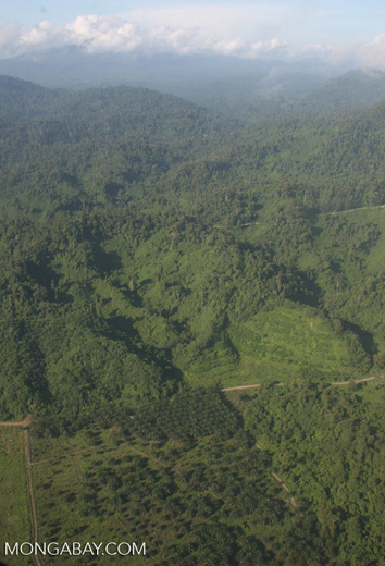 Oil palm plantations in Malaysian Borneo -- borneo_2848