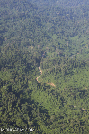 Logged forest in Malaysian Borneo