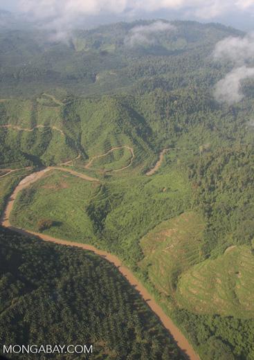 Oil palm plantations in Malaysian Borneo -- borneo_2853