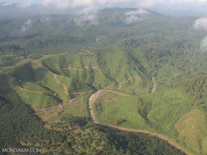 Oil palm plantations in Malaysian Borneo -- borneo_2855