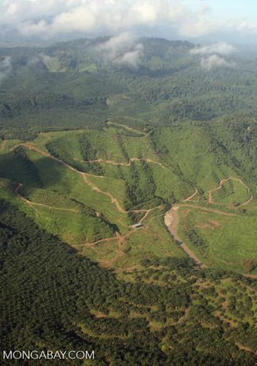 Oil palm plantations in Malaysian Borneo -- borneo_2856