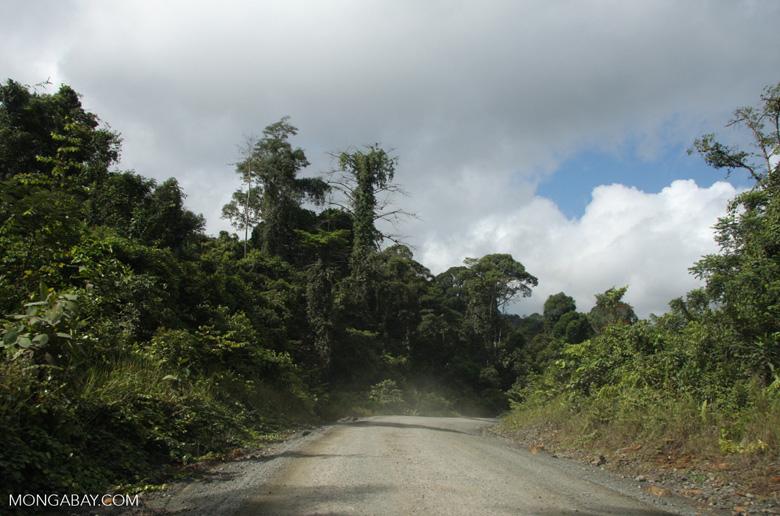 Logging road in Borneo -- borneo_2891