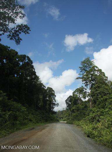 Logging road in Borneo -- borneo_2894
