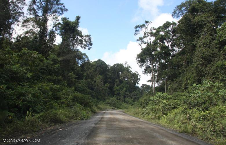 Logging road in Borneo -- borneo_2897