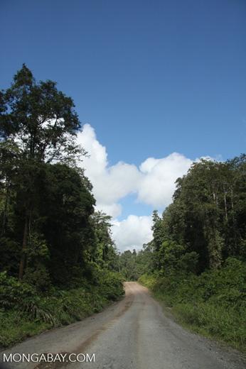 Logging road in Borneo -- borneo_2926