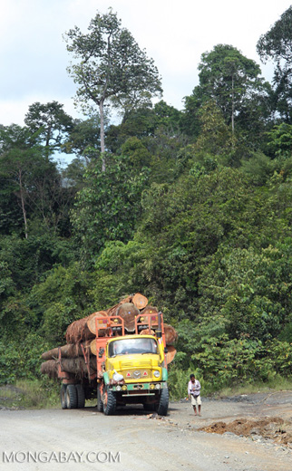 Logging truck carrying timber out of the Malaysian rainforest -- borneo_2932a