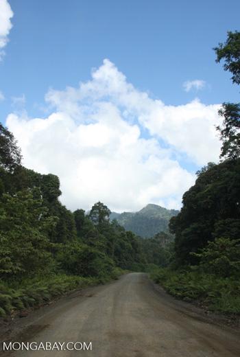 Logging road in Borneo -- borneo_2937