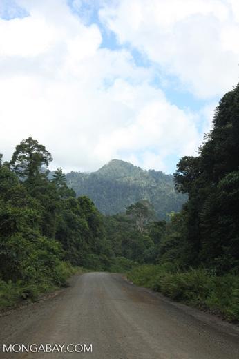 Logging road in Borneo -- borneo_2938