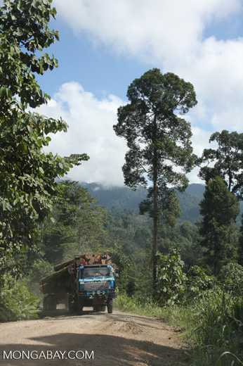 Logging truck carrying timber out of the Malaysian rainforest -- borneo_2944