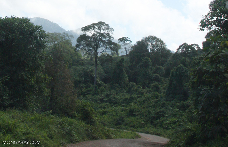 Logged over forest -- borneo_2956