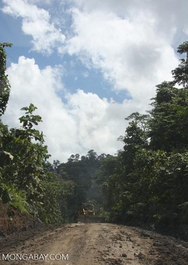 Bulldozer on a logging road -- borneo_3003