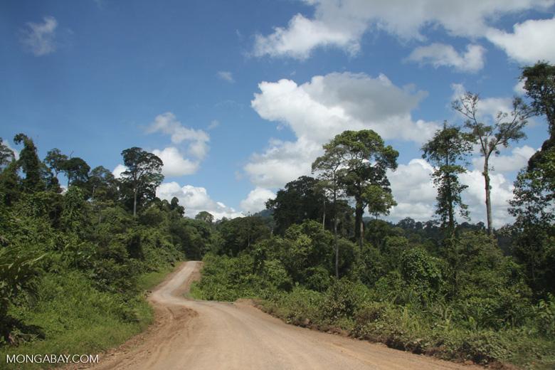 Logging road in Borneo -- borneo_3021