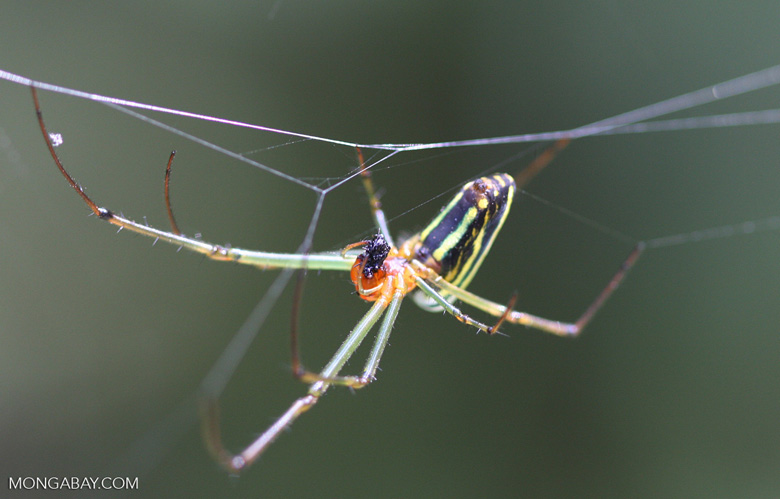 Multi-colored spider