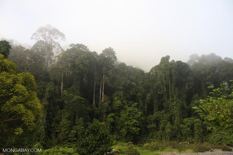 Danum Valley Rainforest -- borneo_3603
