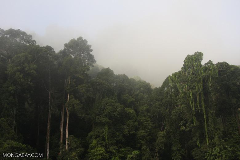 Danum Valley Rainforest -- borneo_3609