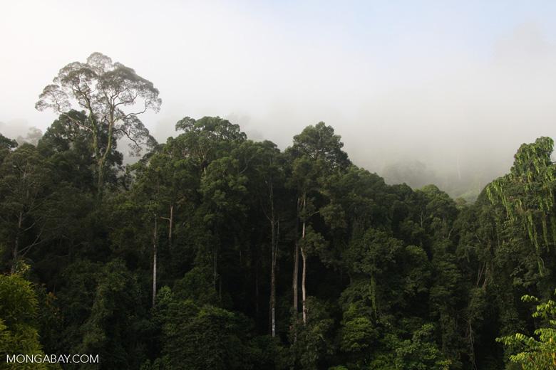 Danum Valley Rainforest -- borneo_3613