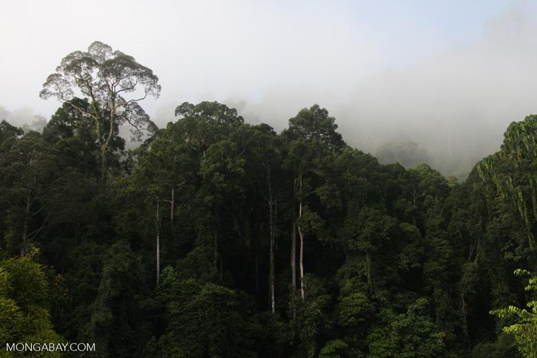 Danum Valley Rainforest -- borneo_3614