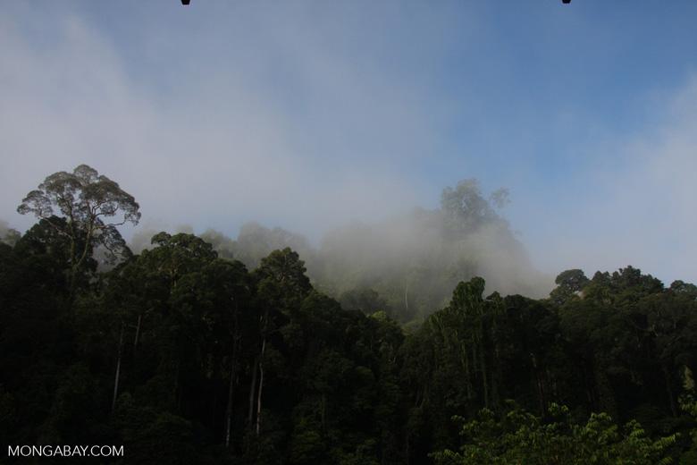 Danum Valley Rainforest -- borneo_3615
