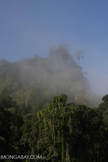 Danum Valley Rainforest -- borneo_3618