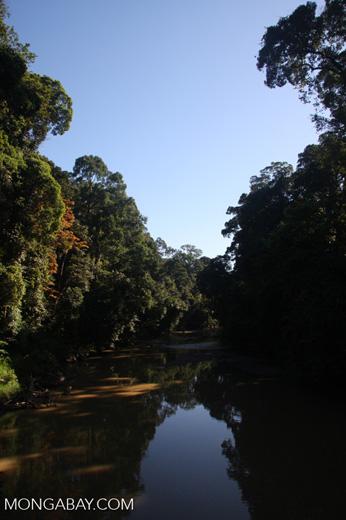 Danum river -- borneo_3651