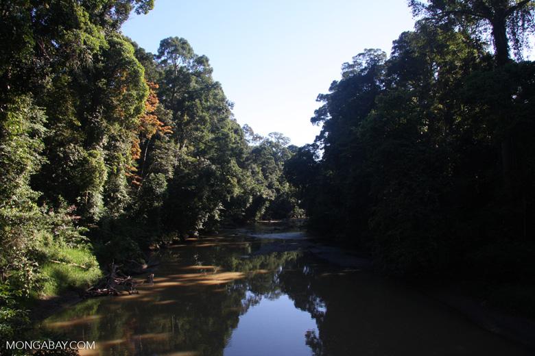 Danum river -- borneo_3652