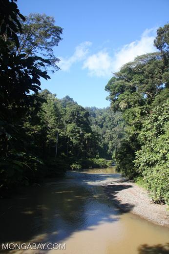 Danum river -- borneo_3653