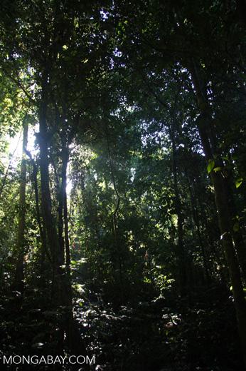 Borneo rainforest -- borneo_3656