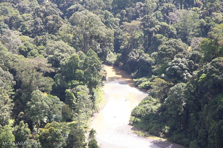 Danum river in Borneo -- borneo_3706