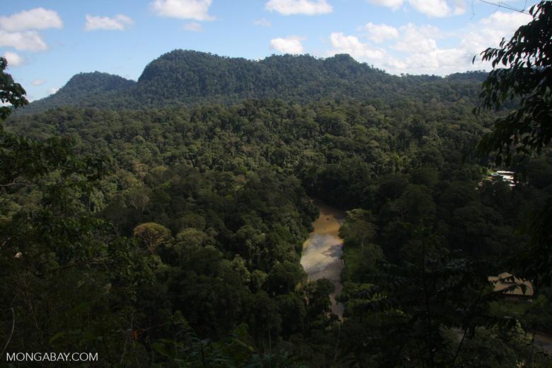 Borneo Rainforest Lodge at Danum Valley -- borneo_3716