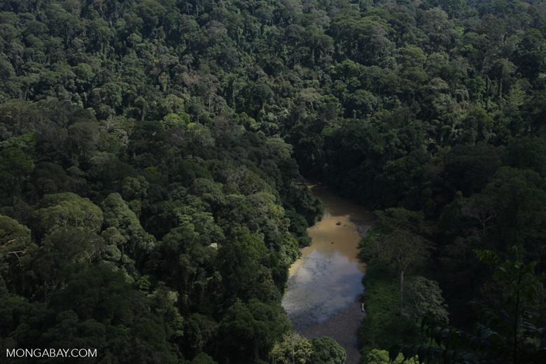 Danum river in Borneo -- borneo_3717