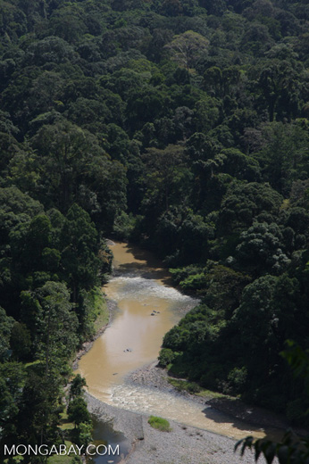 Danum river in Borneo -- borneo_3750