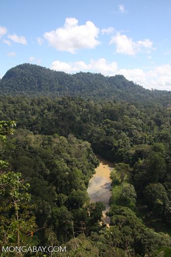 Danum river in Borneo -- borneo_3753