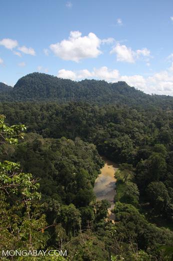 Danum river in Borneo -- borneo_3754