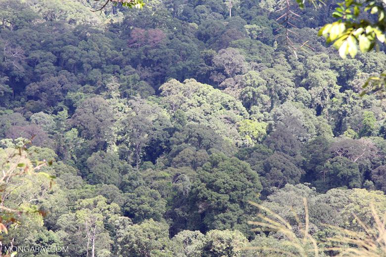 Bornean rain forest