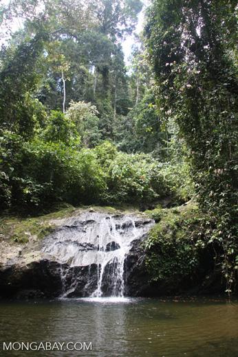 Waterfall in the Bornean rainforest -- borneo_3810