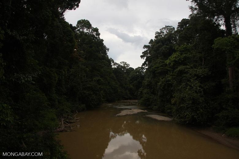 Danum river -- borneo_3895