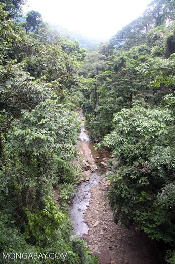 Rainforest creek -- borneo_4024