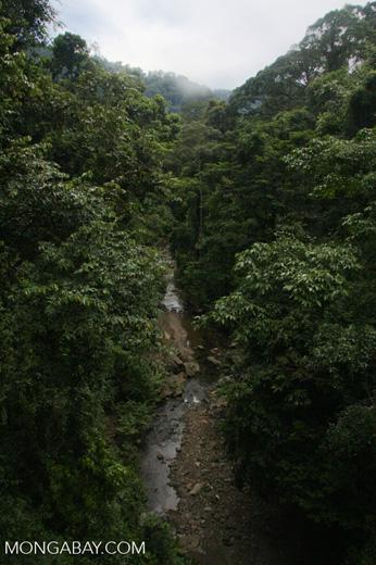 Rainforest creek -- borneo_4025